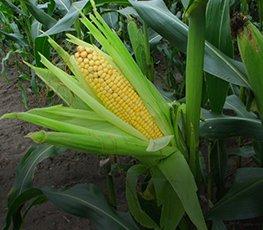 Фунгициды оптом для сельхоз культур